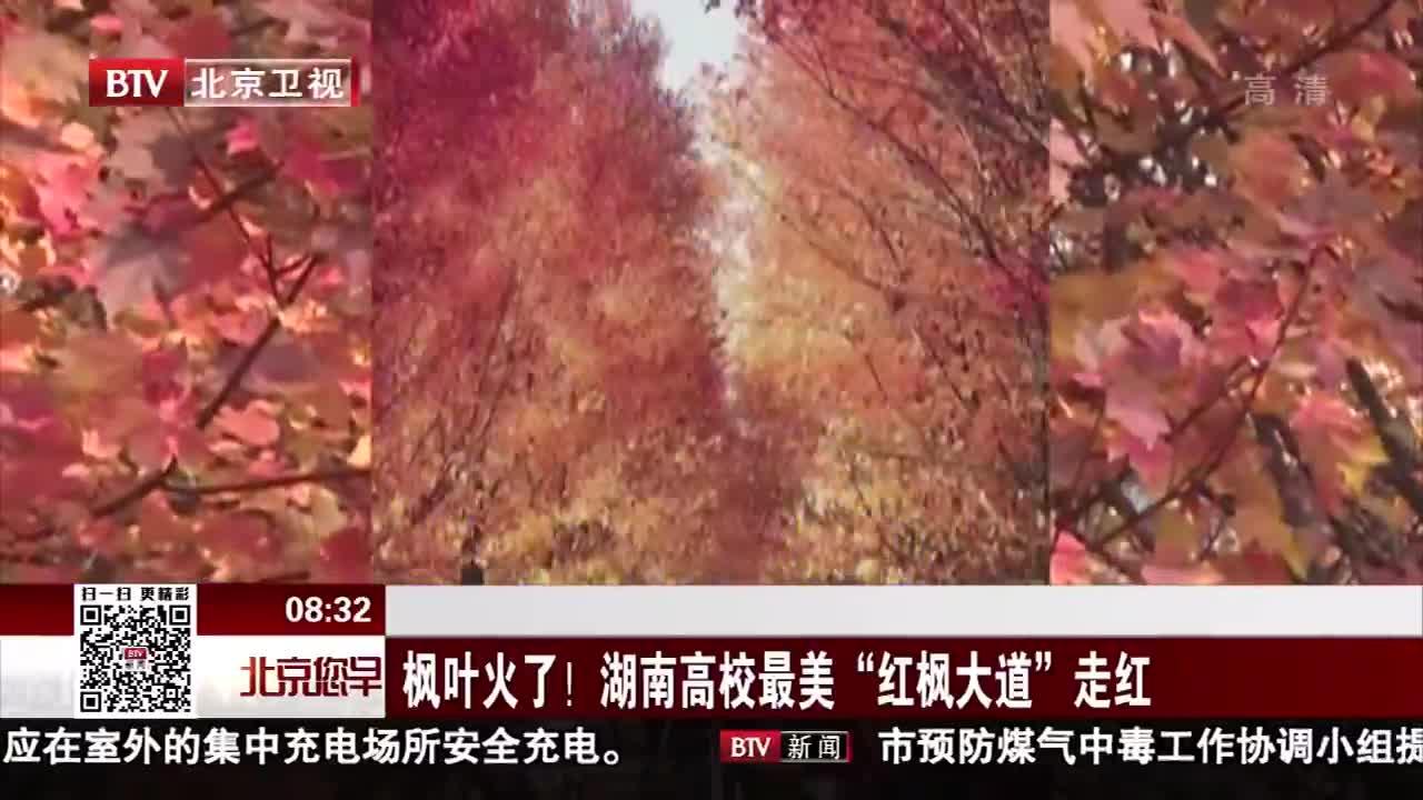 """[视频]枫叶火了!湖南高校最美""""红枫大道""""走红"""