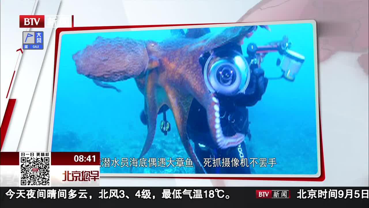 [视频]潜水员海底偶遇大章鱼 死抓摄像机不罢手