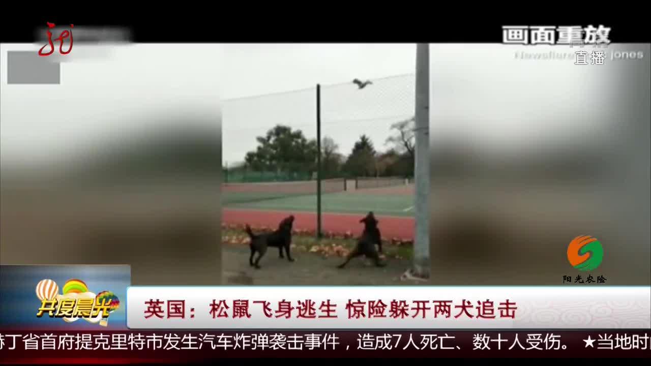 [视频]英国:松鼠飞身逃生 惊险躲开两犬追击
