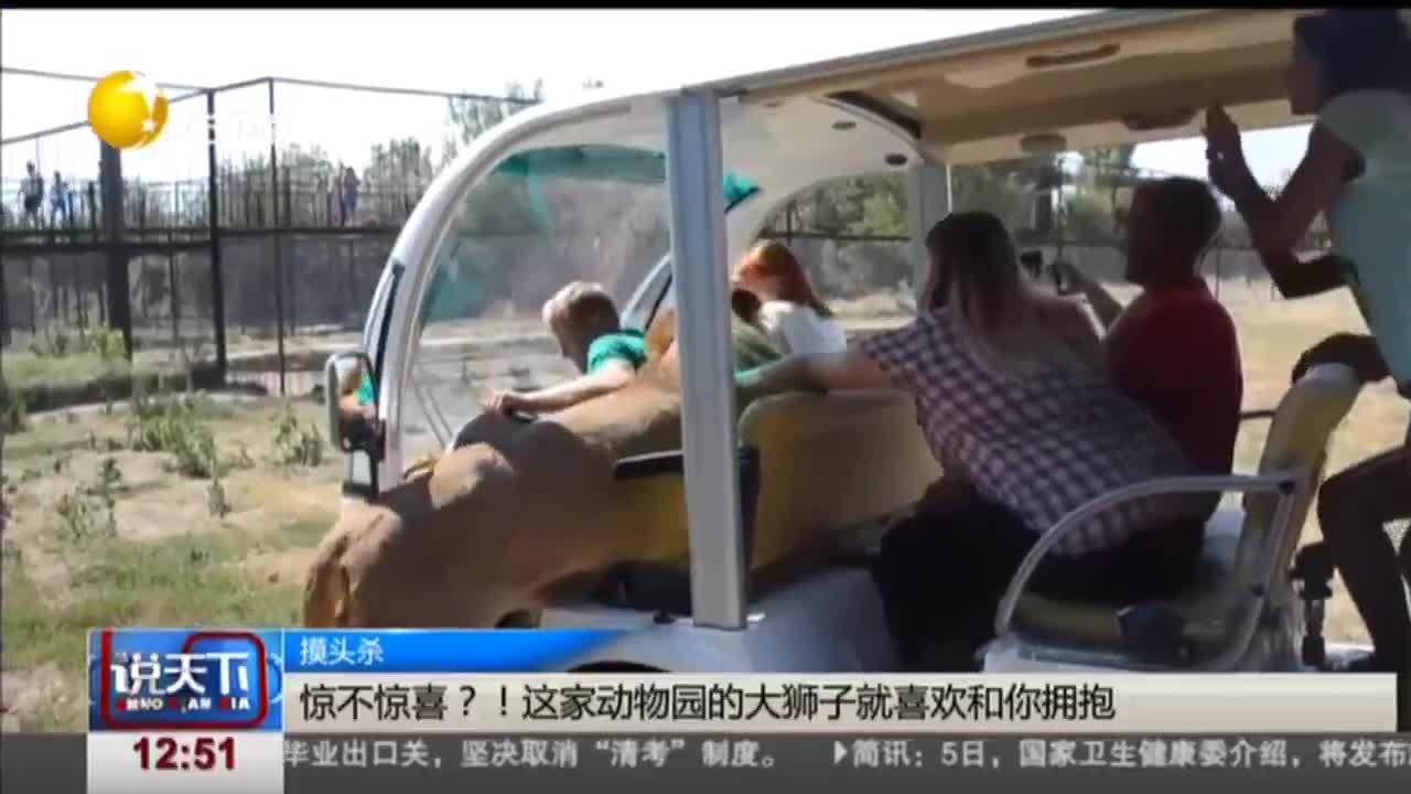 [视频]惊不惊喜?!这家动物园的大狮子就喜欢和你拥抱