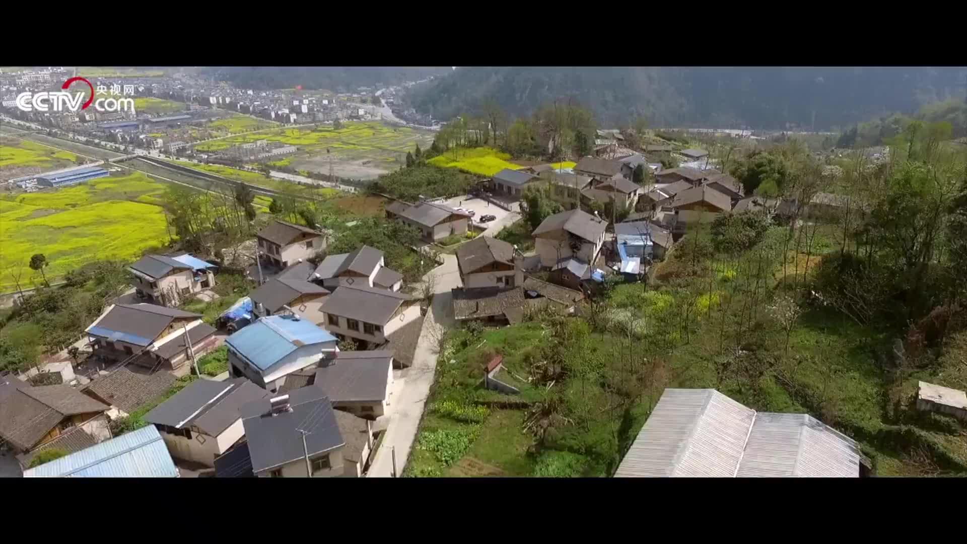 """[视频]""""绝地""""奇迹:他们用10年,把震毁的树一棵一棵栽回去"""