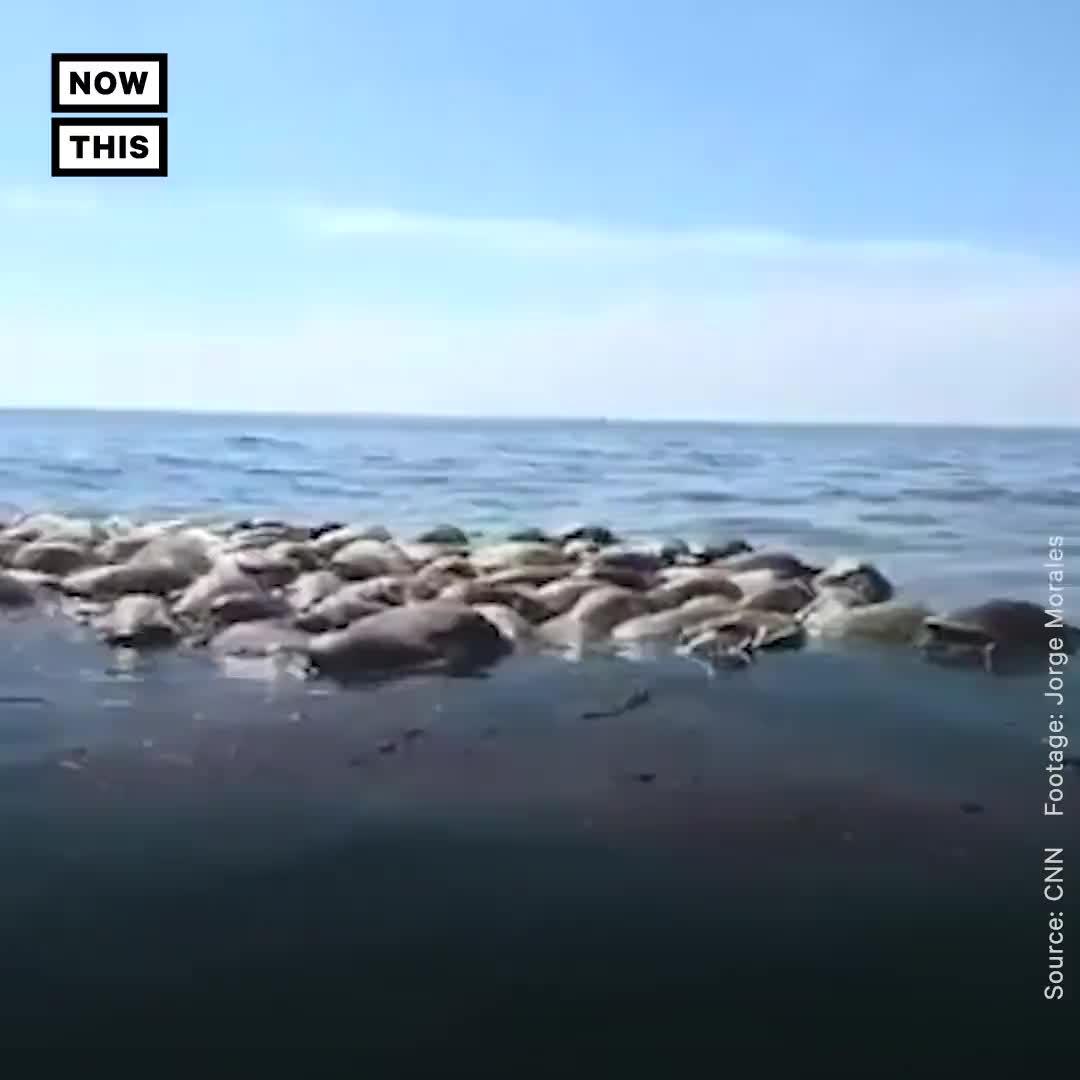 [视频]墨西哥海边发现三百多只濒危海龟的尸体
