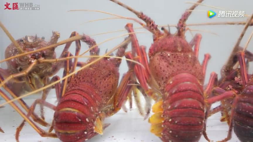 [视频]看饿了!5斤重的大龙虾从澳洲游过来了 进口博览会一分钟㊺