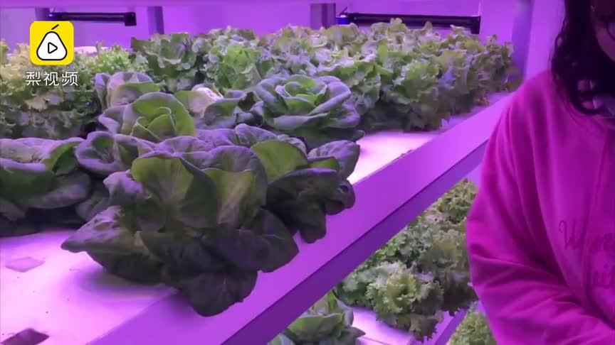 [视频]高科技!没有太阳和土壤 集装箱种蔬菜月产600斤