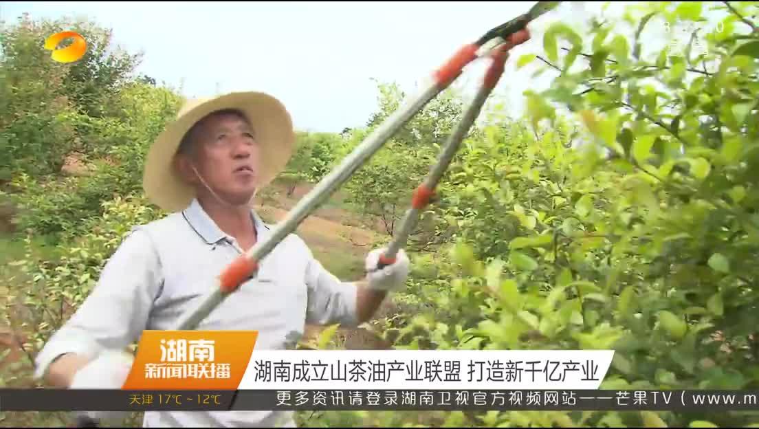 湖南成立山茶油产业联盟 打造新千亿产业