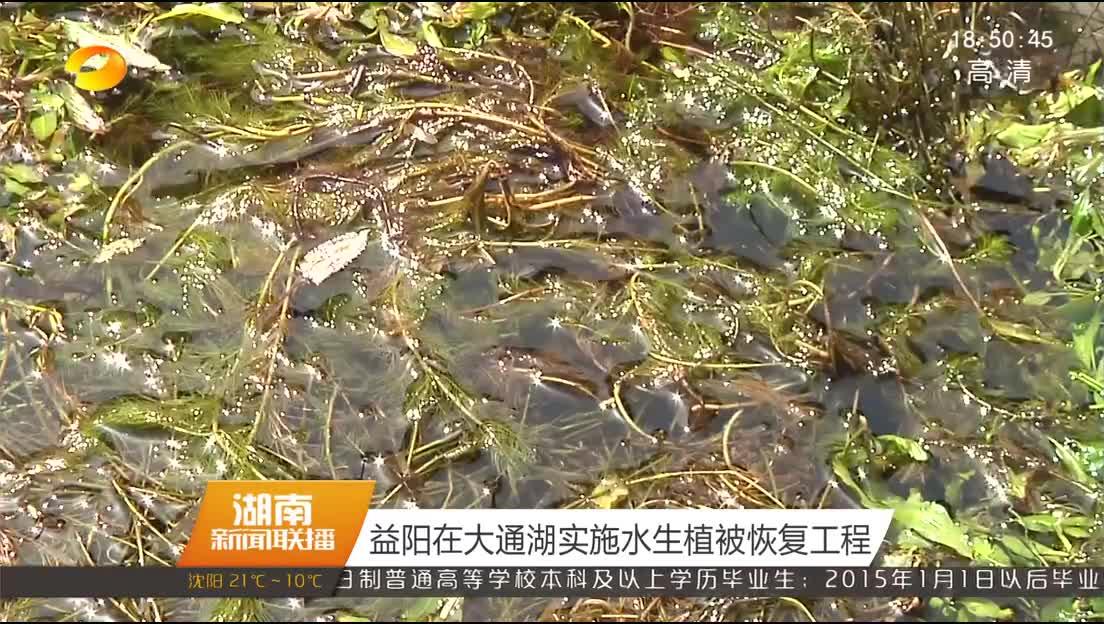 益阳在大通湖实施水生植被恢复工程