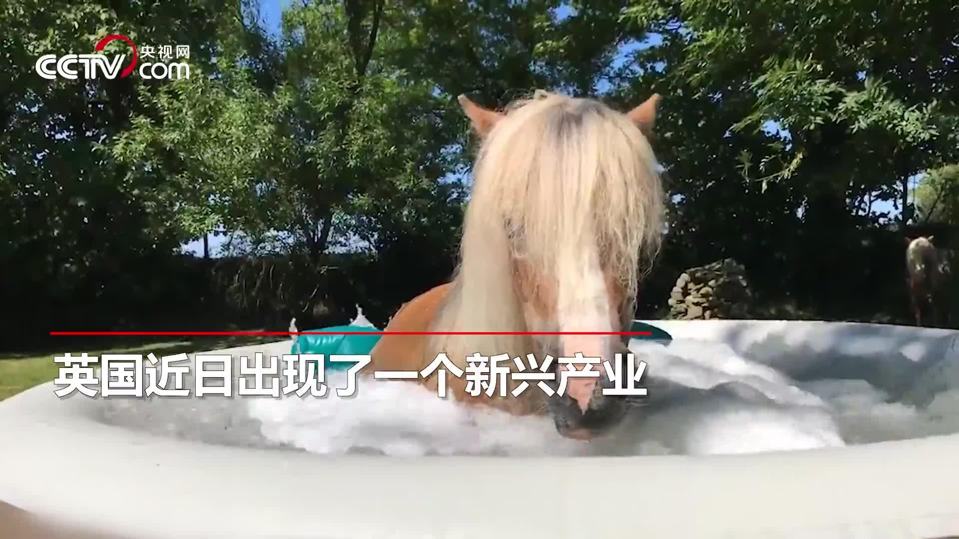 """[视频]马儿也能敷面膜?英国一女子开设""""马儿spa会所"""""""