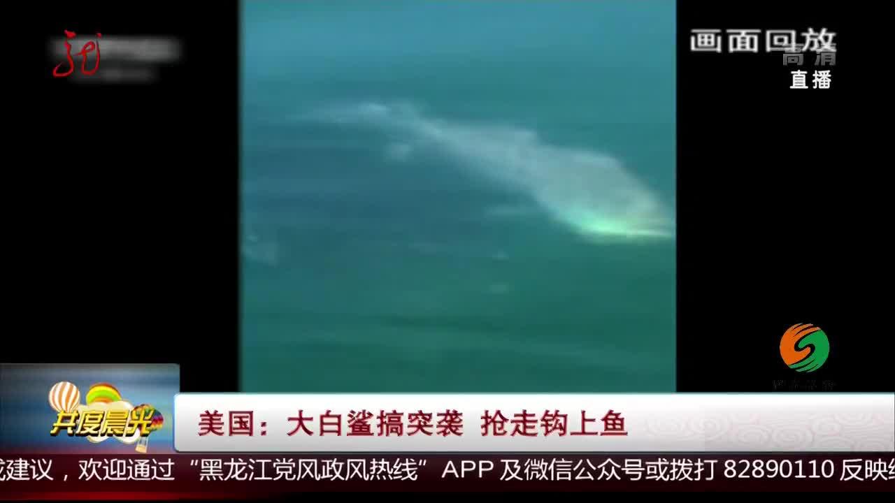 [视频]美国:大白鲨搞突袭 抢走钩上鱼
