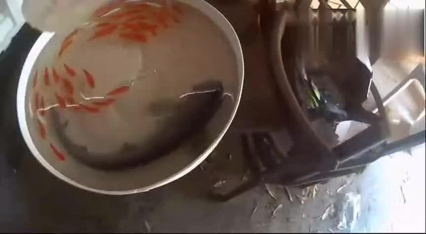 [视频]画出来的大鱼吃小鱼 竟然在水里游泳了