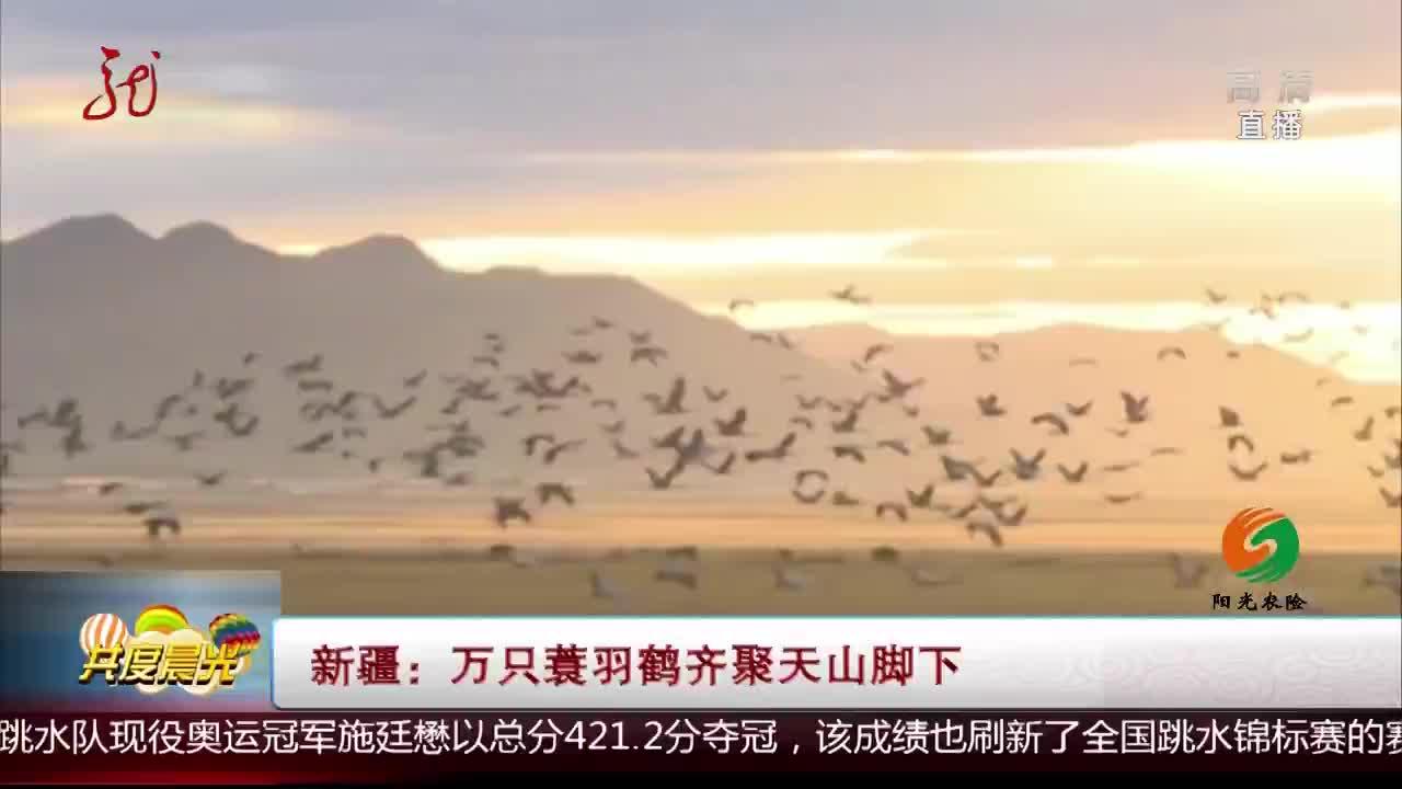 [视频]新疆:万只蓑羽鹤齐聚天山脚下
