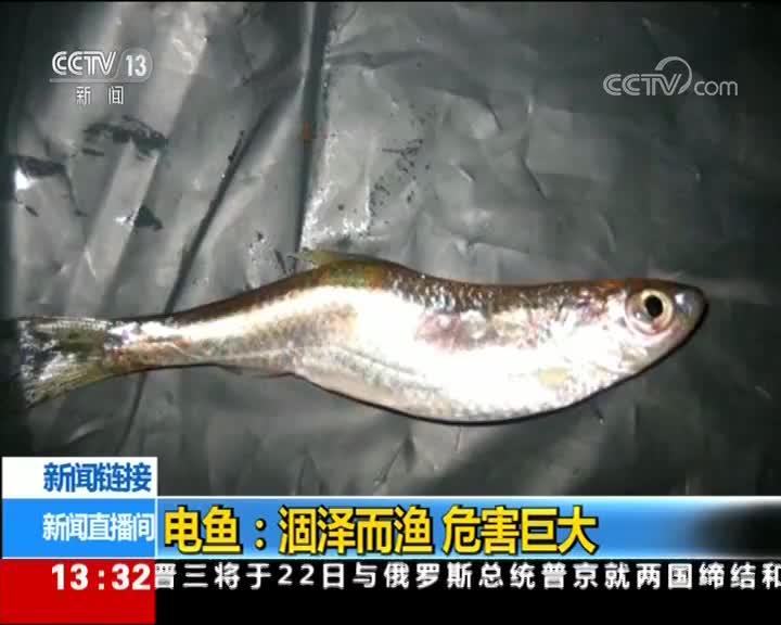 [视频]电鱼:涸泽而渔 危害巨大