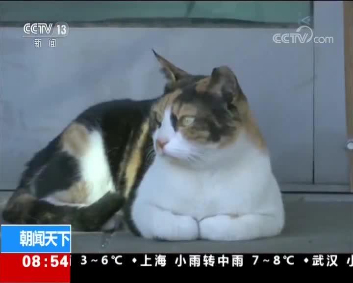 """[视频]以色列 车站""""淡定猫""""走红网络"""