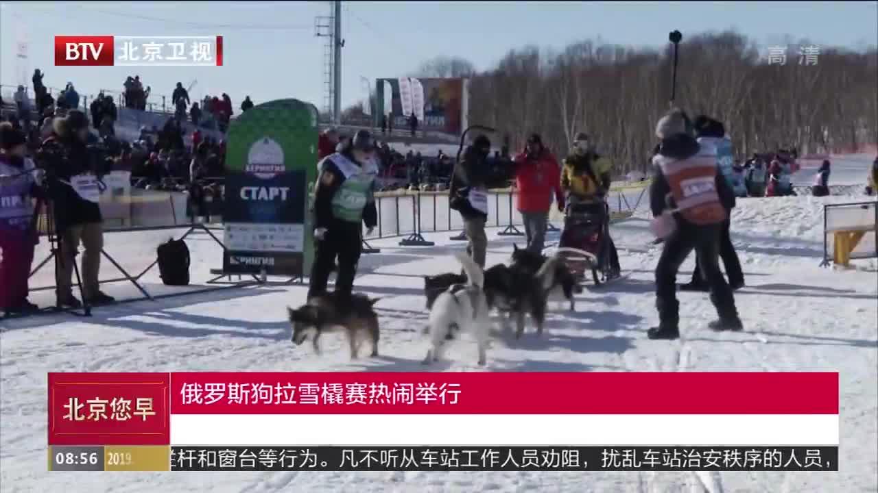 [视频]俄罗斯狗拉雪橇赛热闹举行