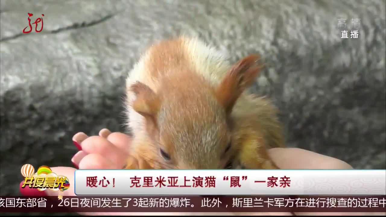 """[视频]暖心!克里米亚上演猫""""鼠""""一家亲"""