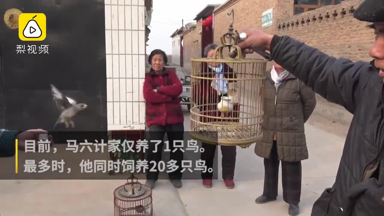 [视频]老汉养的鸟能听懂人话 最爱叼钱