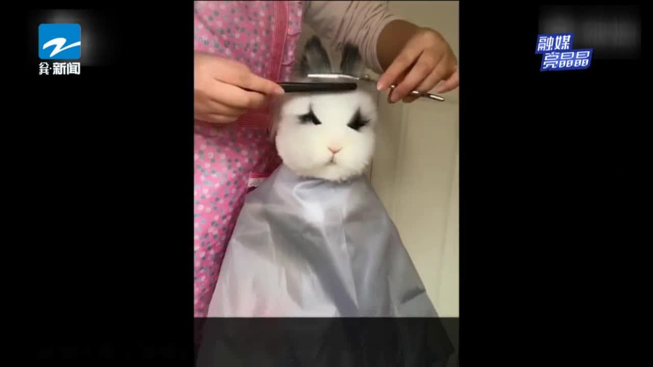 [视频]靠理发出道的兔子 脾气暴躁时还会掀餐盘