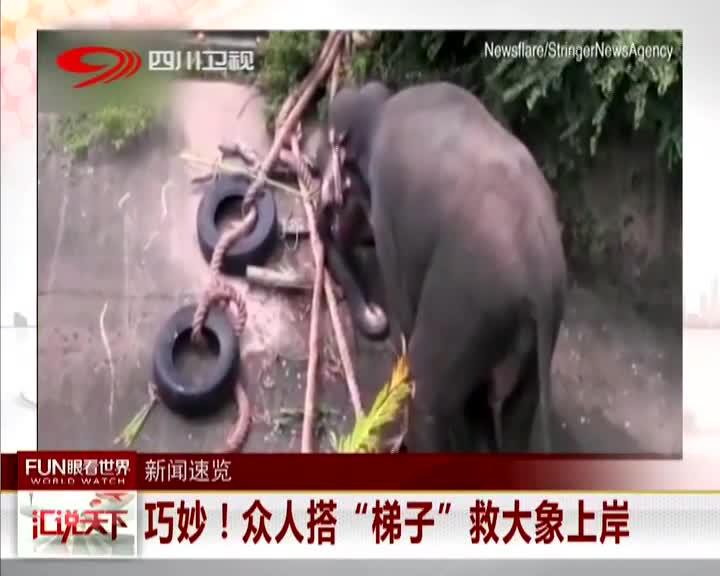 """[视频]巧妙!众人搭""""梯子""""救大象上岸"""
