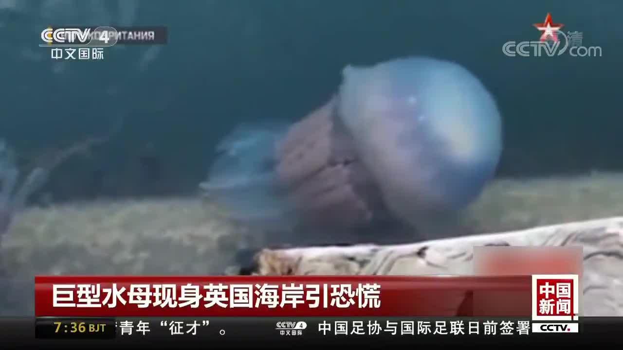 [视频]巨型水母现身英国海岸引恐慌