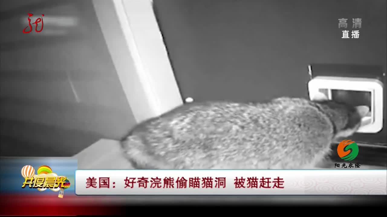 [视频]美国:好奇浣熊偷瞄猫洞 被猫赶走