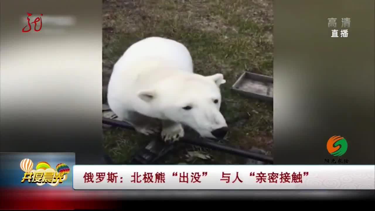 """[视频]俄罗斯:北极熊""""出没"""" 与人""""亲密接触"""""""