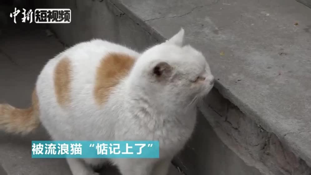"""[视频]北京有位""""流浪猫王"""" 一声口哨儿就能喊来一群猫""""围你"""""""