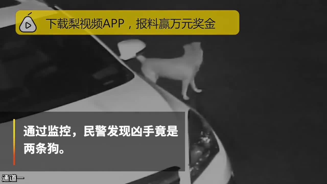 [视频]神操作!多车刹车遭破坏 真凶竟是狗