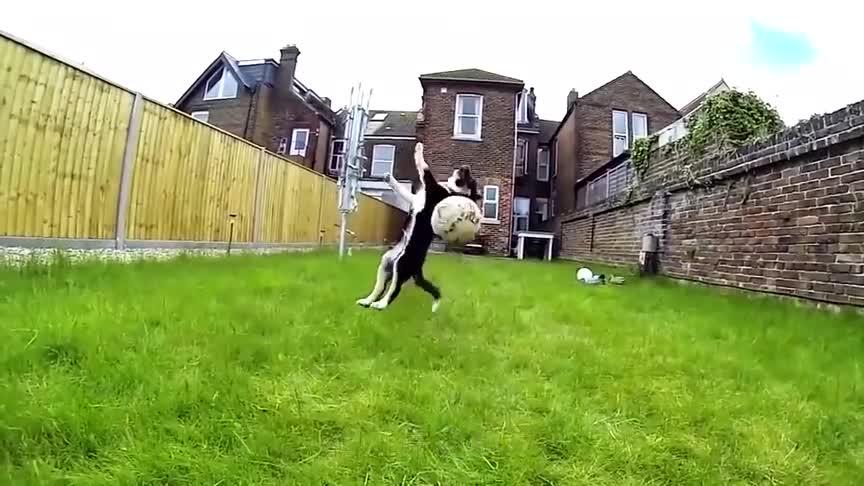 [视频]美国小区检测狗大便DNA,随地大小便主人被罚款