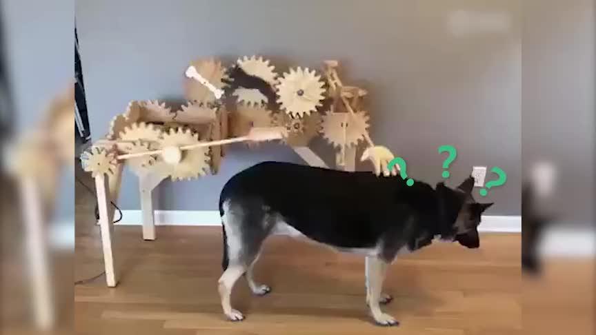 [视频]感受到这份冰冷的爱了吗?全自动撸狗机横空出世!