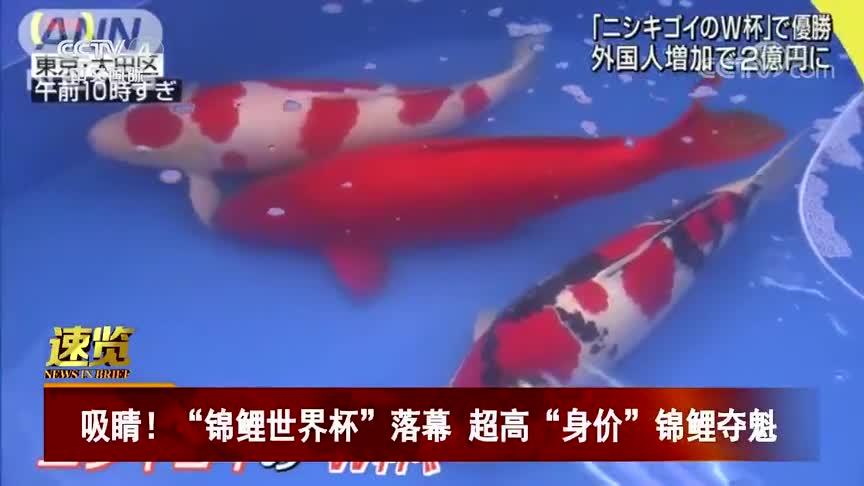 """[视频]吸睛!""""锦鲤世界杯""""落幕 超高""""身价""""锦鲤夺魁"""