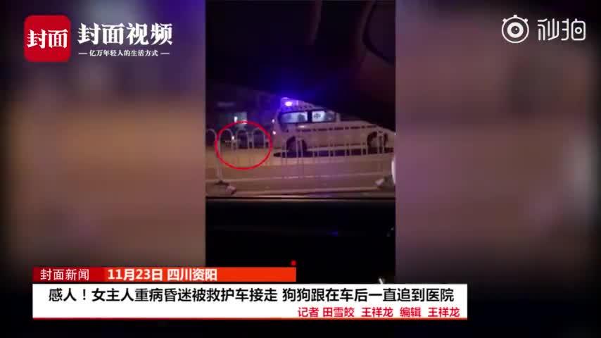 [视频]主人重病昏迷被救护车接走 狗狗一路追到医院