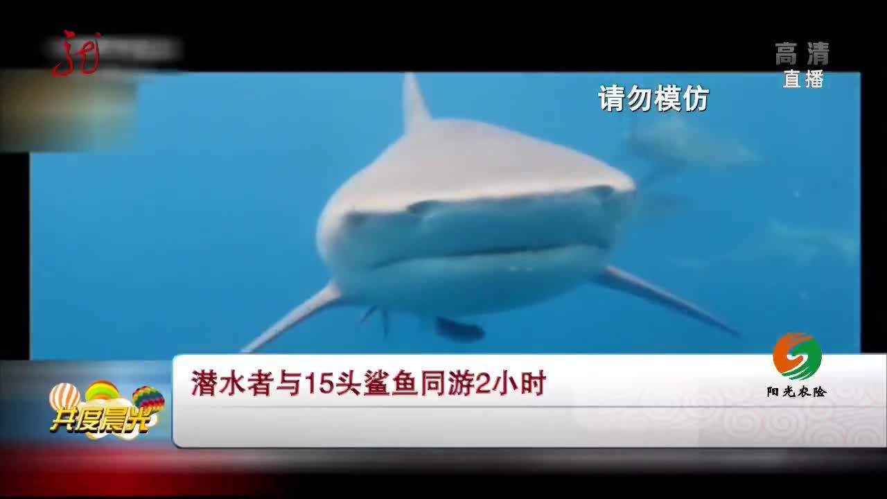 [视频]潜水者与15头鲨鱼同游2小时