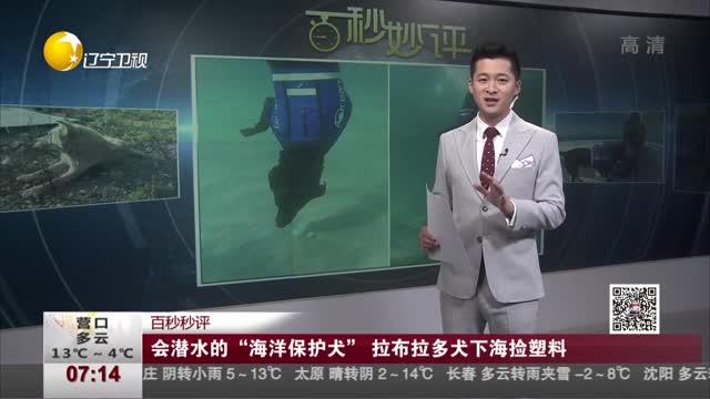 """[视频]会潜水的""""海洋保护犬"""" 拉布拉多犬下海捡塑料"""