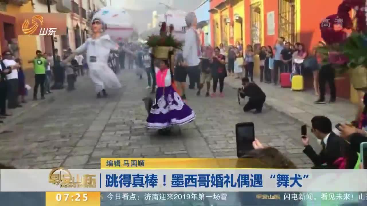 """[视频]跳得真棒!墨西哥婚礼偶遇""""舞犬"""""""