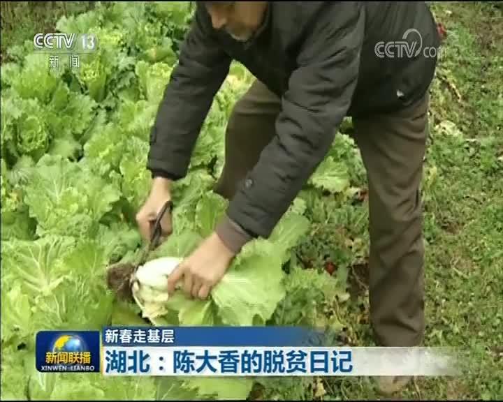 [视频]【新春走基层】湖北:陈大香的脱贫日记