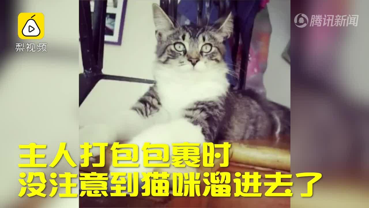 [视频]调皮猫咪偷偷钻进包裹 被寄到千里之外 还上了新闻