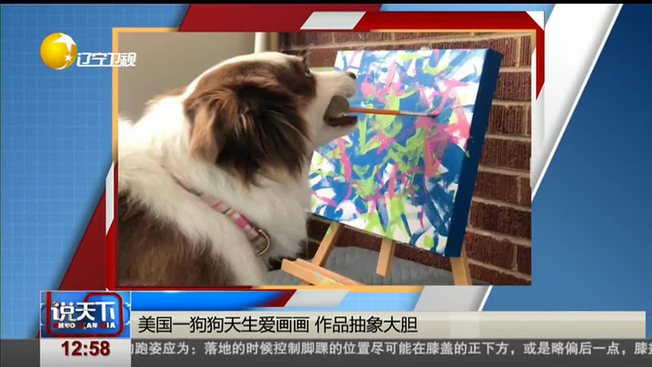 [视频]美国一狗狗天生爱画画 作品抽象大胆