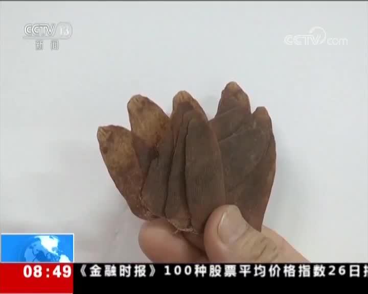 [视频]广州海关破获特大走私穿山甲鳞片案