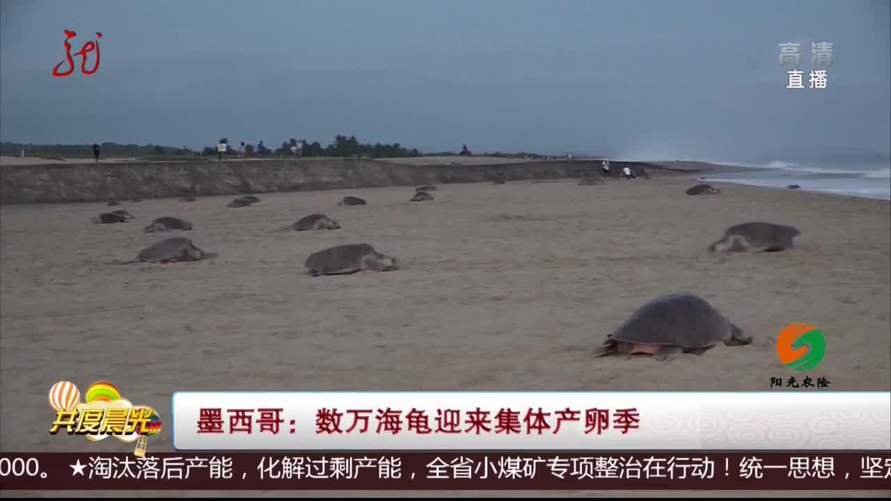 [视频]墨西哥:数万海龟迎来集体产卵季