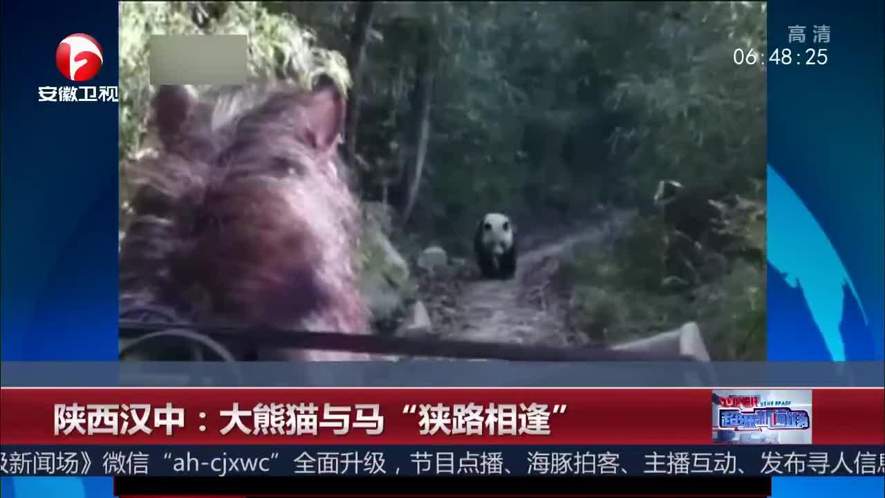 """[视频]陕西汉中:野生大熊猫与马""""狭路相逢"""""""