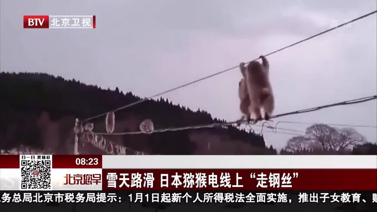 """[视频]雪天路滑 日本猕猴电线上""""走钢丝"""""""