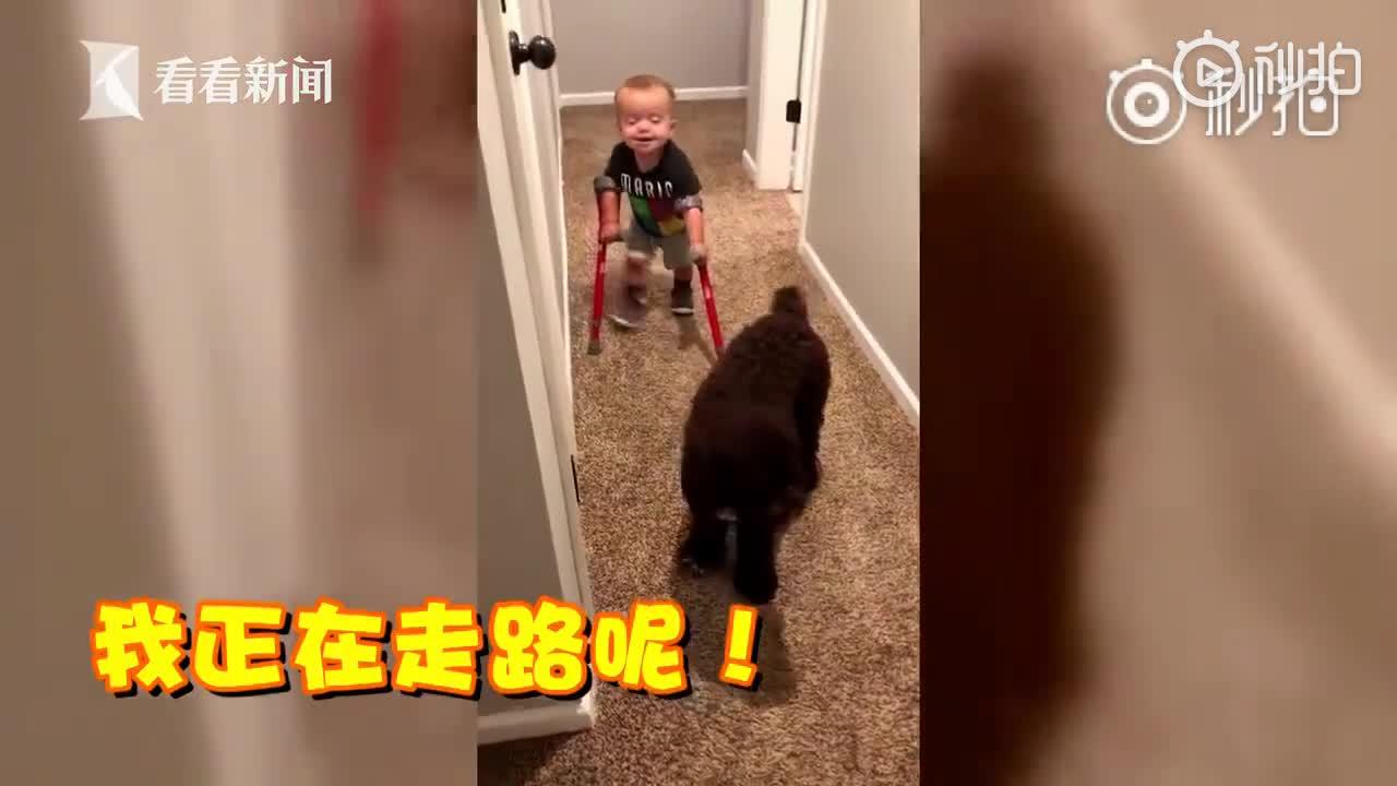 """[视频]2岁脊柱裂男孩向狗炫耀走路 网友称看到""""希望"""""""