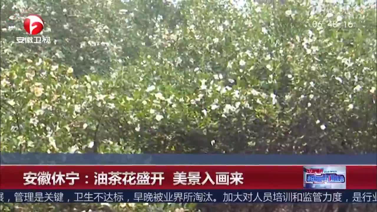 [视频]安徽休宁:油茶花盛开 美景入画来