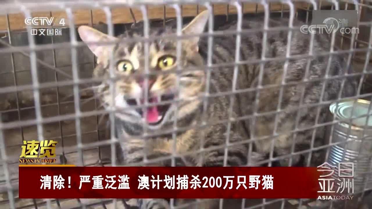 [视频]清除!严重泛滥 澳计划捕杀200万只野猫