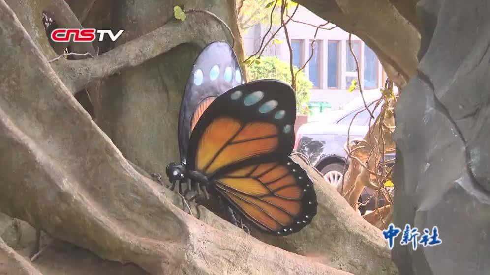 [视频]七旬老人一生与蝶结缘 二十余载创作数百件蝶艺画