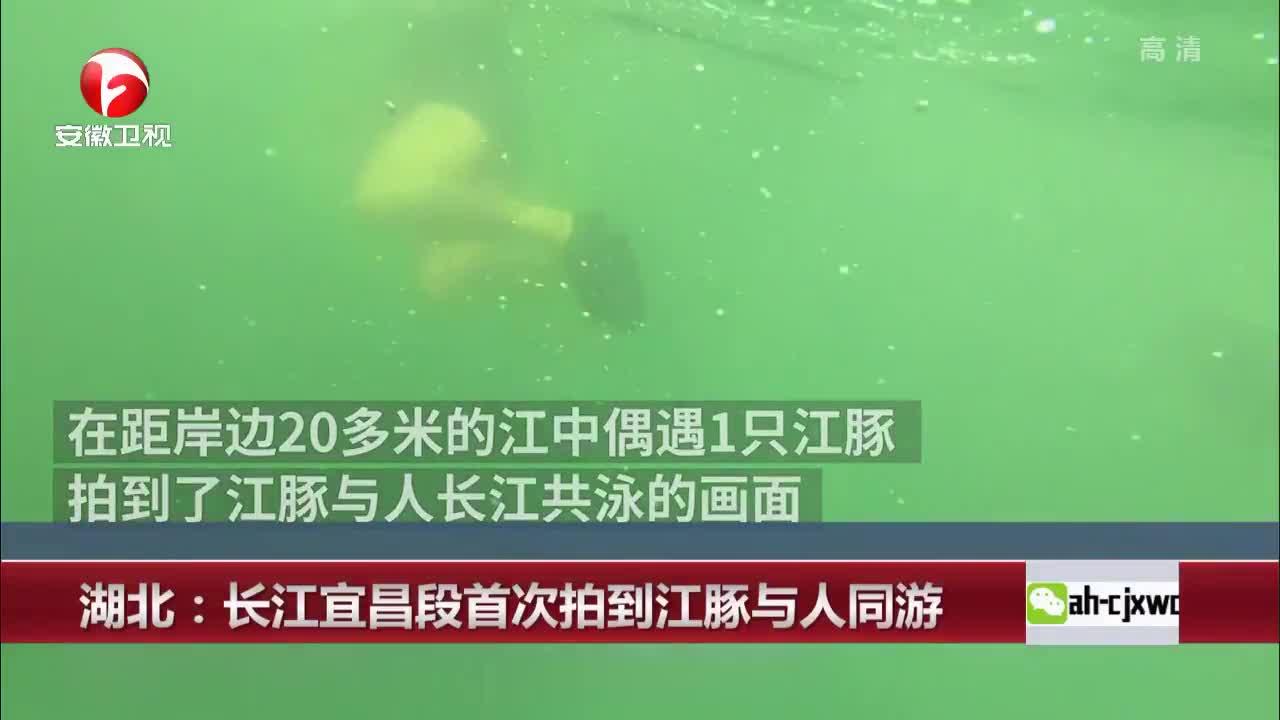 [视频]湖北:长江宜昌段首次拍到江豚与人同游