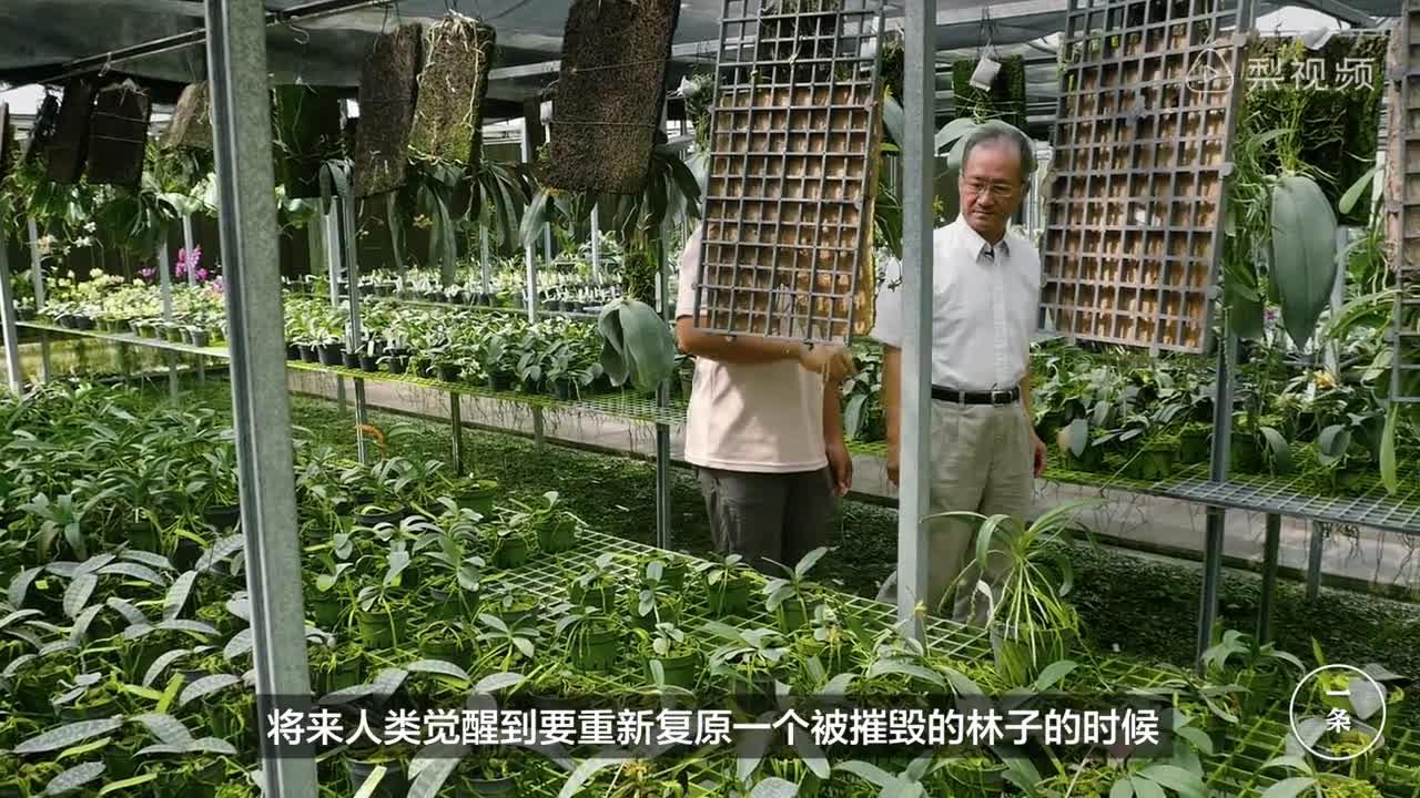 [视频]为保护山中动植物 教授买下12000平米山谷