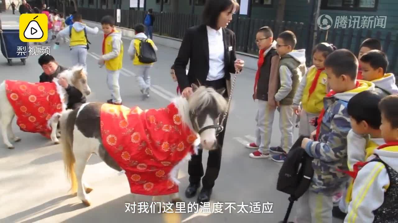 [视频]萌萌哒!新疆迷你马穿棉袄过冬 拼命撒欢