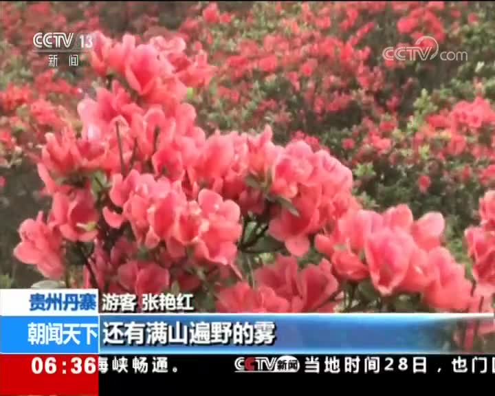 [视频]贵州丹寨 7000多亩野生杜鹃花竞相绽放