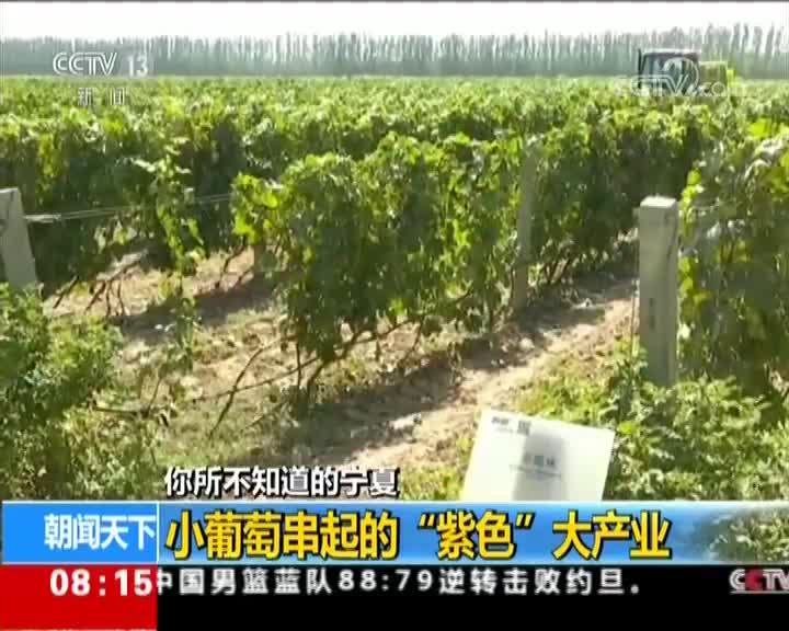 """[视频]你所不知道的宁夏 发展葡萄酒产业 打造""""紫色名片"""""""