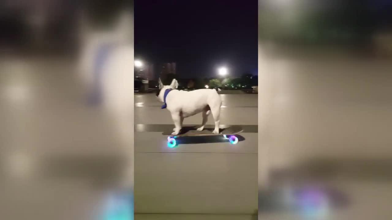 [视频]牛!小狗玩滑板车玩到飞起